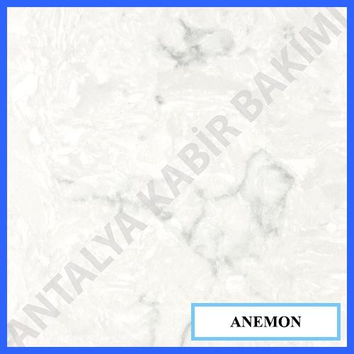 anemon_cc8be
