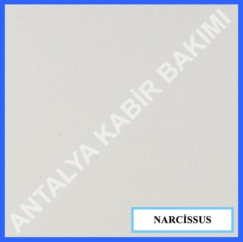 NARCİSSUS