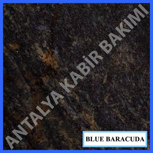 blue baracuda
