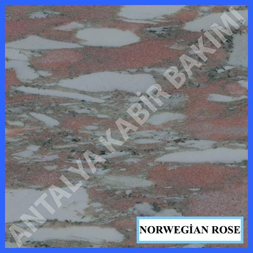 norwegian rose